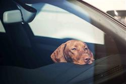 DON'T LEAVE DOGS IN HOT CARS