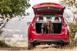 top tips for travelling with your dog