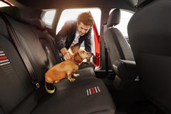 training your dog to travel in the car